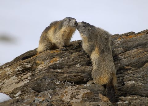 Amore come eco tra le montagne